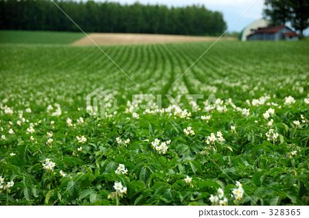 春天风景图片750*250