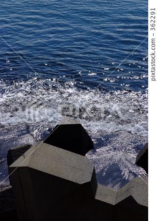四足动物 大海 波浪