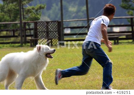 狗 奔跑的小狗 绿色