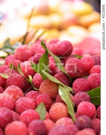 杨梅属植物 杨梅 日本月桂树的果实