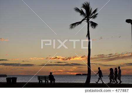 夕阳椰子树水画