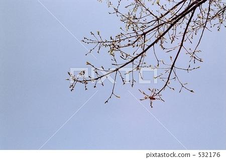 图库照片: 分支 树枝 枯树