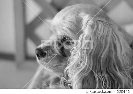 动物 黑白的 狗