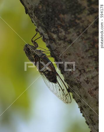 照片素材(图片): 蝉 蝗虫 暑假