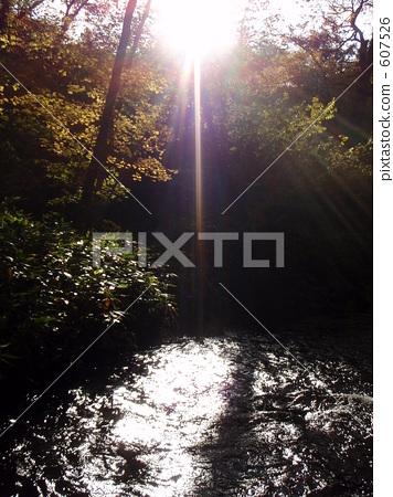 秋天 北海道 森林