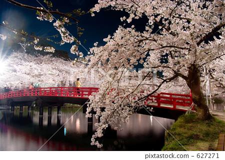 照片 植物_花 樱花 樱花 照亮 夜樱 夜晚的樱花树  *pixta限定素材仅