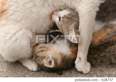 父母和小孩 猫 小猫
