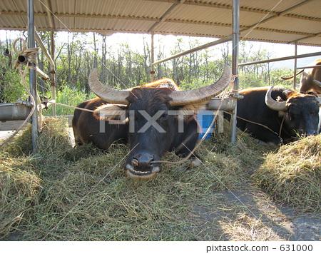 牛棚 牲口图片