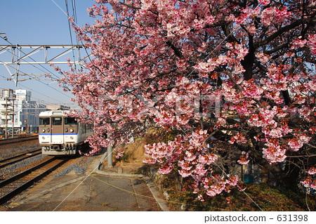 照片: 樱桃树 冬季樱花 火车