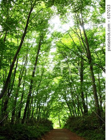 林地路 首页 照片 风景_自然 森林_森林 森林 林地路  *pixta限定素材