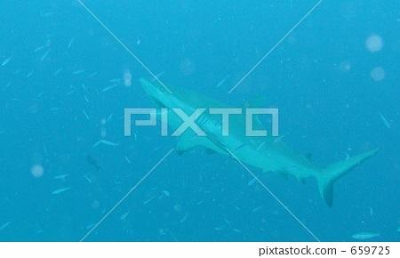 图库照片: 鲨鱼 海底的 海里