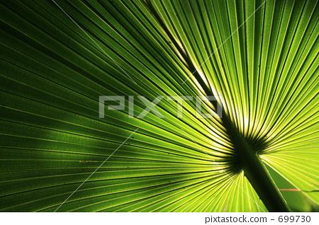 椰子树 树叶 银杏叶