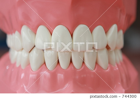 牙齿 齿轮 模型