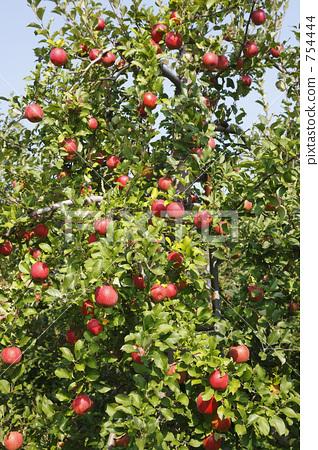 苹果树风景图片手机壁纸