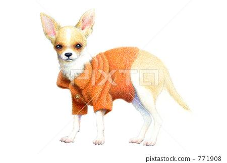 狗 吉娃娃 彩色铅笔