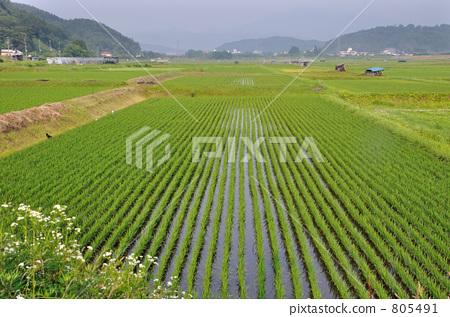 照片素材(图片): 岩手县 田园 田园风景