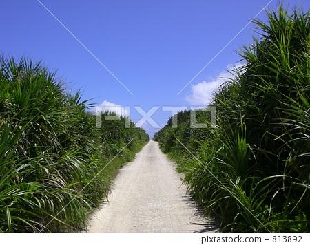 碎石路 冲绳 直线路径