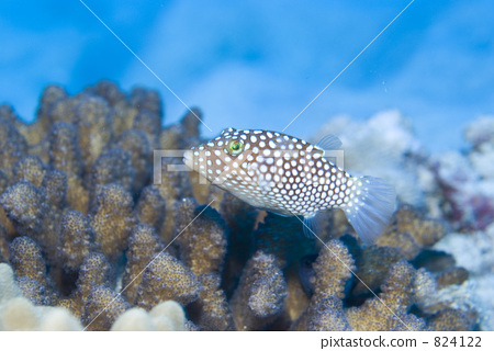 壁纸 海底 海底世界 海洋馆 水族馆 桌面 450_320