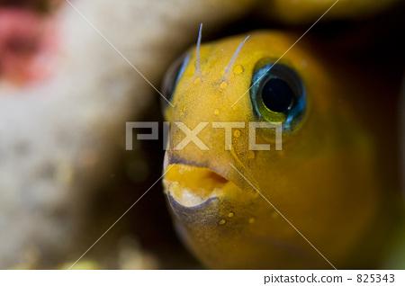 鱼 一只小动物 黄色