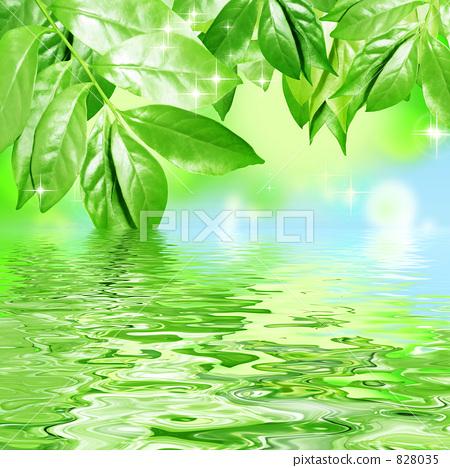 树叶 银杏叶 水面