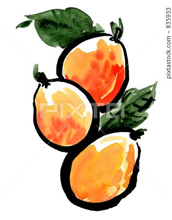 可爱的琵琶水果童画