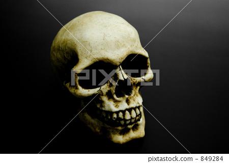 头盖骨 头骨 头颅骨