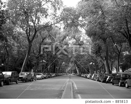 道路 路旁树木 树木