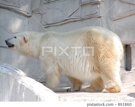 北极熊 天竺寺动物园 大阪