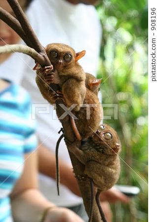 可爱 动物 漂亮-图库照片