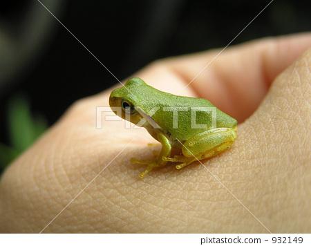 青蛙是不是爬行动物