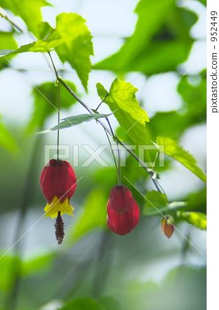 提洛尔灯 叶子 树叶