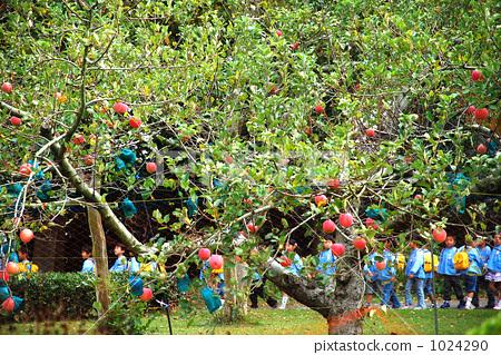 苹果树上 儿童 孩子