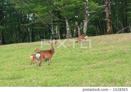 动物_鸟儿 陆生动物 鹿 照片 鹿 父母身份 父母和小孩 首页 照片 动物
