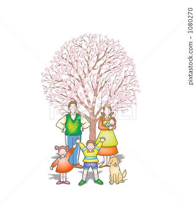 樱桃树 家庭 樱花