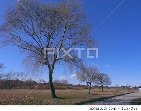 首页 照片 运动_运动 跳舞_跳舞 草裙舞 冬天树  *pixta限定素材仅在