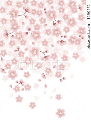 图库插图: 樱花 樱桃树 背景素材