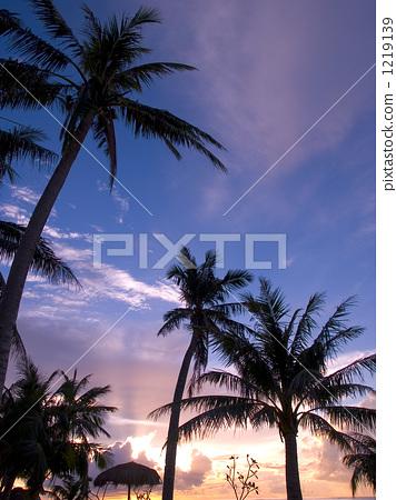 图库照片: 椰子树 棕榈树 夕阳