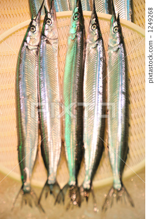 图库照片: 鹤嘴鱼 针鱼 海产品
