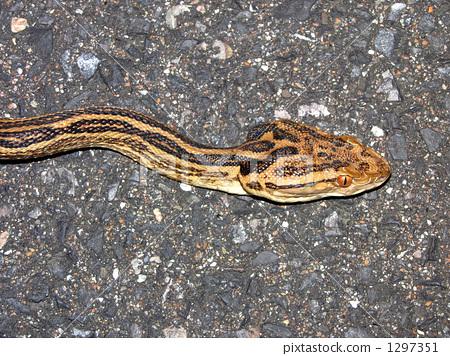 南充白塔公园大蛇