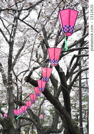 樱花 吉野樱花树 纸灯笼
