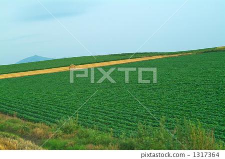 照片素材(图片): 田园 田园风景 原野
