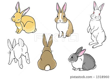一个鸡蛋 兔子 绘画插图图片