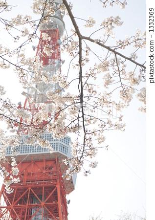 樱桃树 东京铁塔 樱花