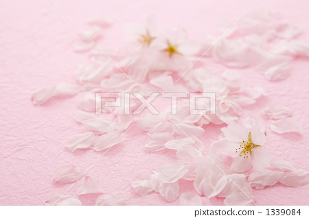 日本纸 樱花 樱桃树