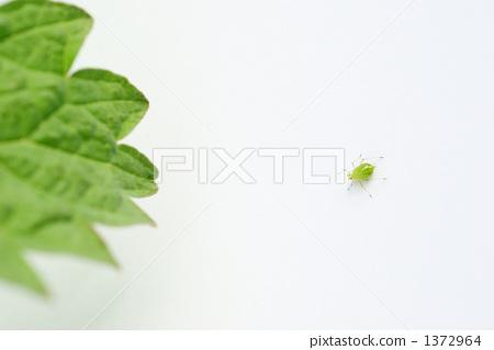 白色背景 绿色 可爱