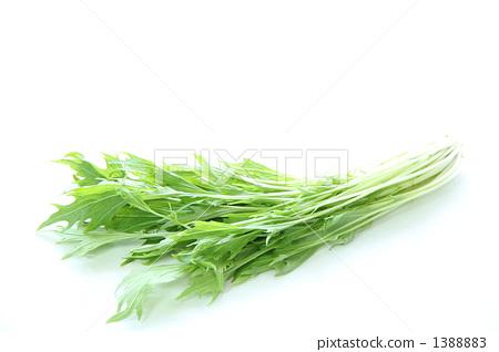 图库照片: 日本芜菁 叶菜类 沙拉配料图片