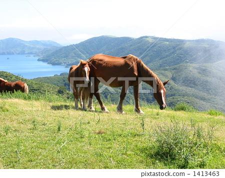 壁纸 动物 马 牛 骑马 450_356