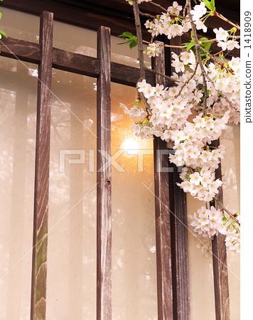吉野樱花树 格子窗 小京都
