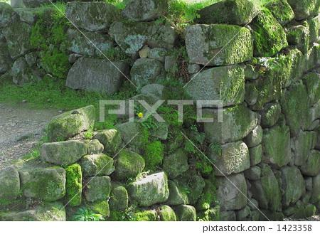 植物_花 其它植物 苔藓 石堆 石垣 石垣市  pixta限定素材      石堆