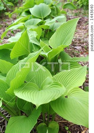 可食用的野生植物